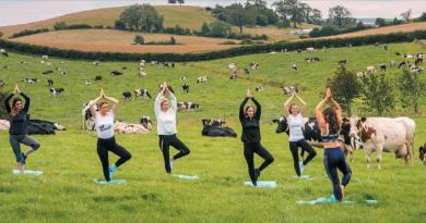 Krowia joga