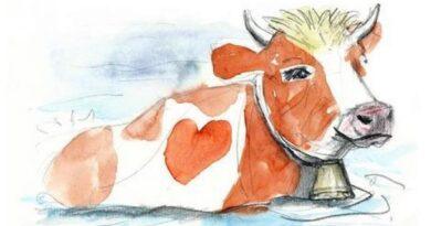 Austriacki  bestseller o polskiej krowie