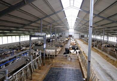 Żywienie zwierząt a stres cieplny i zagrzewanie się kiszonek